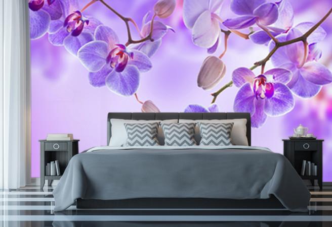 Фотообои сиреневые орхидеи
