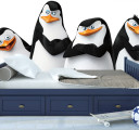 Фотообои пингвины из мадагаскара