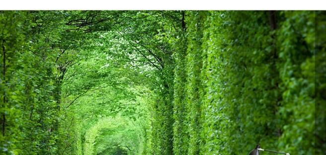 Фотообои Тунель любви