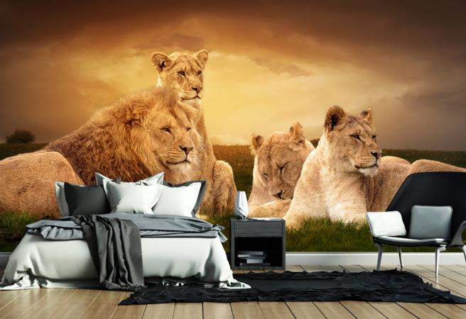 Фотообои львиный прайд