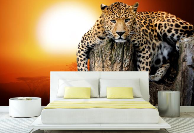 ягуар на закате