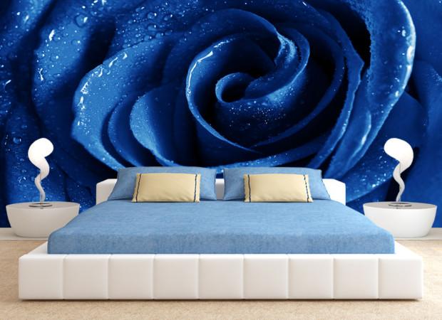 роза в синем цвете