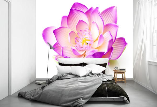 желто фиолетовый цветок