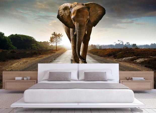 слон в стене
