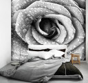Черно-белая роза