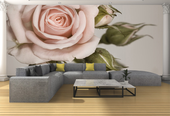 Пастельная роза