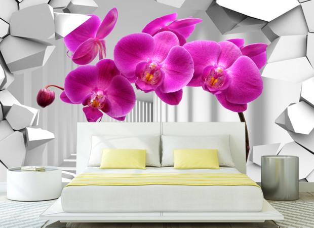 орхидеи в стене