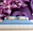 прекрасные орхидеи