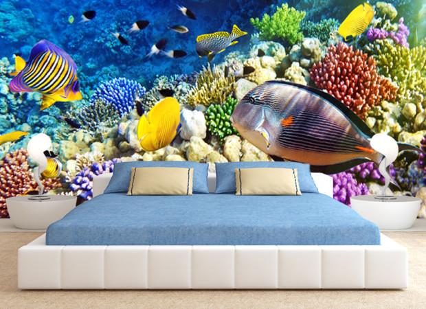 рыбки и кораллы