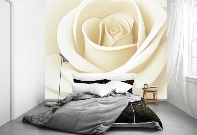 Фотообои распускающаяся роза