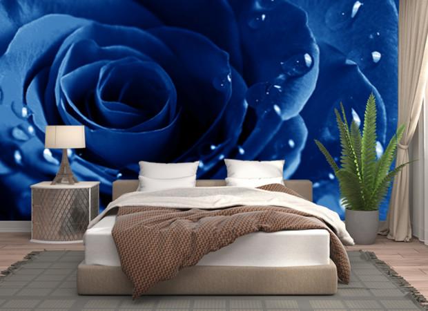 темно-синяя роза