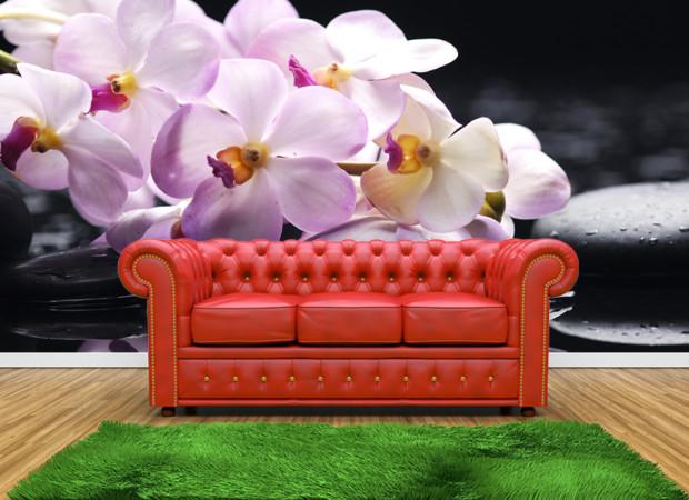 орхидеи на черном