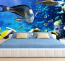 Фотообои Красота подводного мира